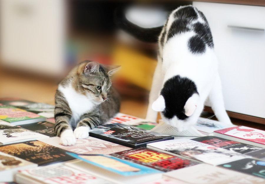 Tag_der_Katze_1